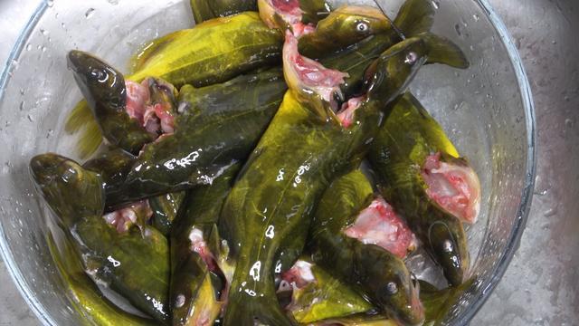 黄辣丁鱼的做法,黄骨鱼怎么做才好吃?30年老阿姨教我拿手绝活,营养好吃又解馋
