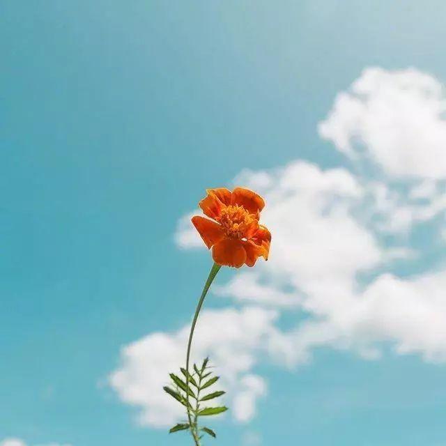 团队精神正能量的句子,正能量的经典励志句子,积极向上,愿你心向阳光