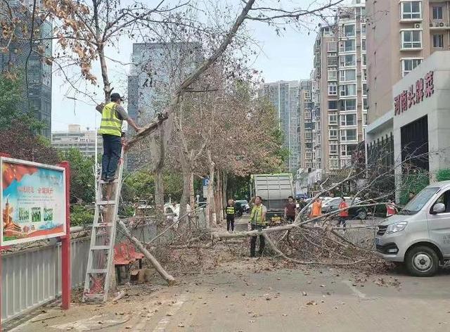 郑州15棵法桐树被灌农药濒临死亡:5名嫌疑人均为饭店员工,已被抓获 全球新闻风头榜 第1张