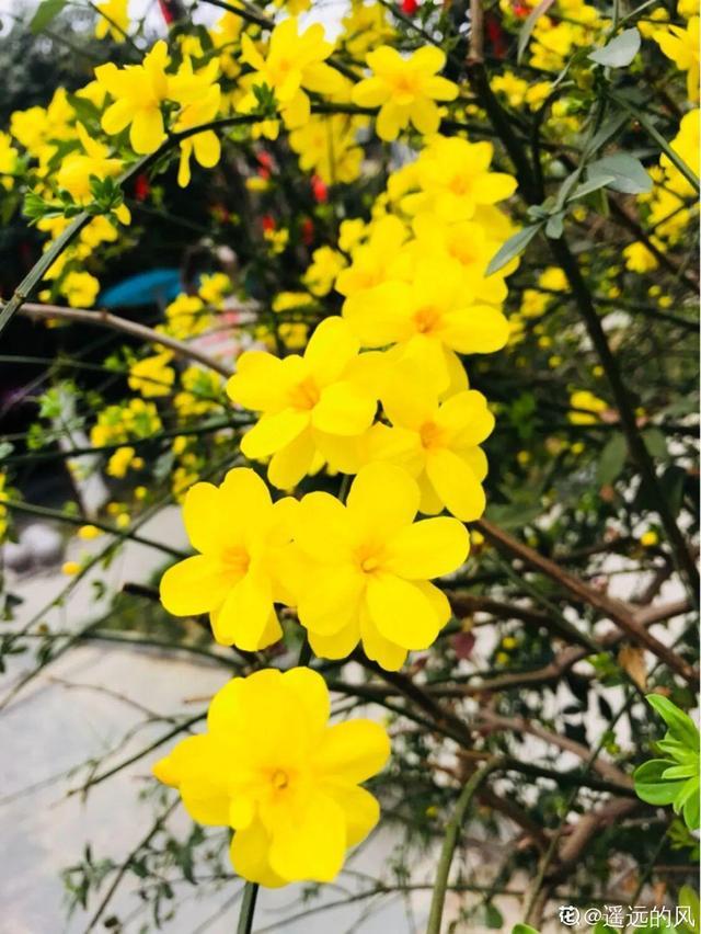 春天有哪些花,清明赏花,带上这份花卉图谱,变身行走的识花机器
