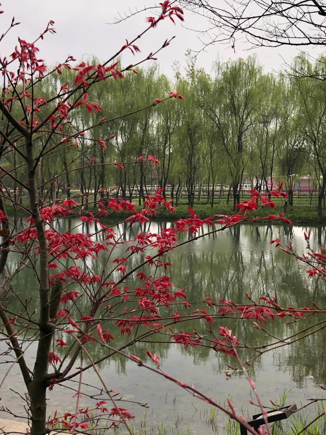 描写下雨的句子,《下雨的时候》作者 姚继林
