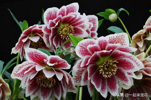 花卉图片大全,被名字耽误的8种花,好养好看开花惊艳,你最喜欢哪种?