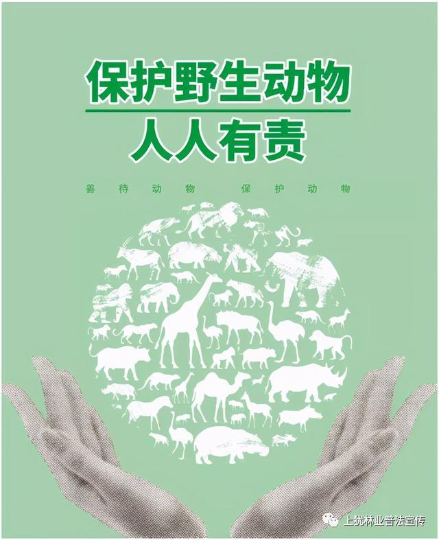 常见野生保护动物与野生保护植物