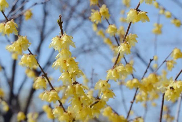 北京花卉,暖风轻抚,世界花卉大观园内一树一树花开,青青嫩草铺满大地