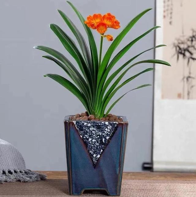 """什么样的花卉,能让客厅""""显大气""""?"""