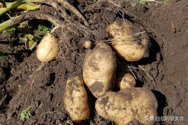维b的吃法,营养师超推荐的土豆吃法,热量低营养足,饱腹感比面包强