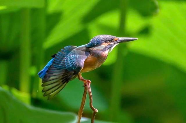 花卉大观园,【FENG景】颜值高!嗓音好!世界花卉大观园竟然藏着这么多种类的鸟儿