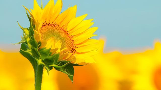 乐观心态短句,让人保持心态向上的正能量句子,温暖深刻,赞不绝口