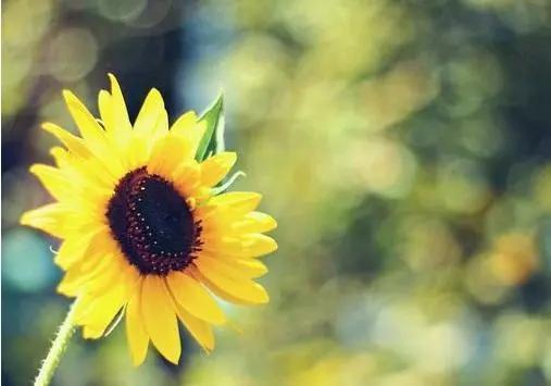 曙光的短句,很温暖入心的句子:不要为一时的失败而怀疑人生,曙光终将属于你