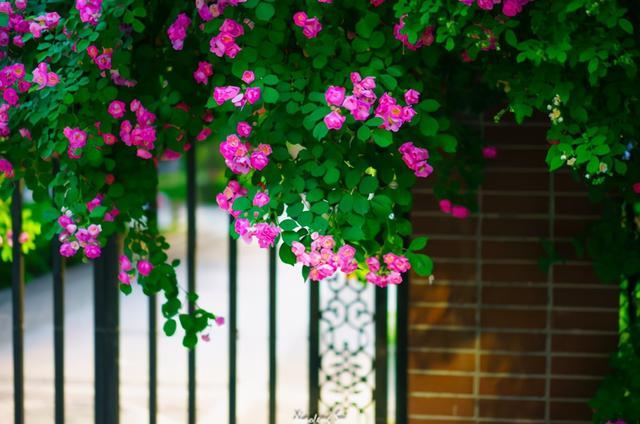 描写夏天的诗,古诗里的夏日风光,短短二十八字,美如画卷