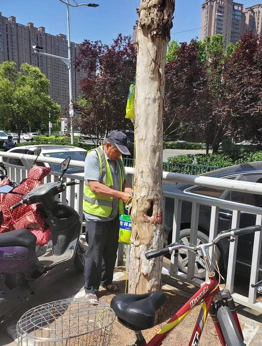 郑州15棵法桐树被灌农药濒临死亡:5名嫌疑人均为饭店员工,已被抓获 全球新闻风头榜 第2张