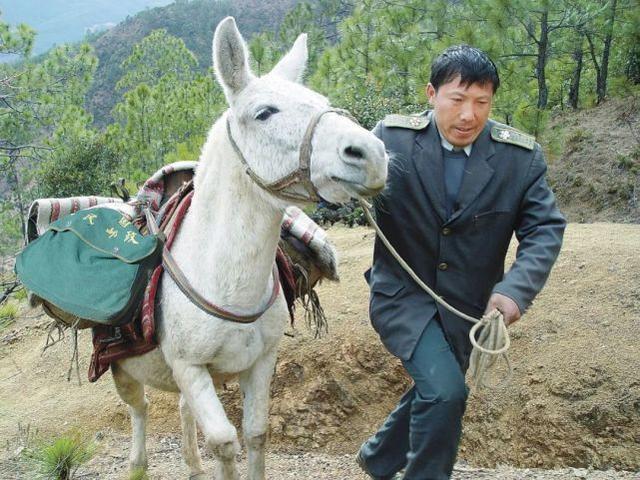 痛心!感动中国的四川邮递员王顺友去世 全球新闻风头榜 第2张