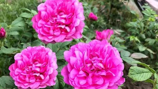 花卉意思,花卉名称的由来