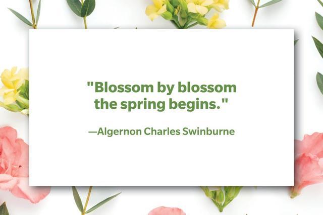 春天的句子,10个与春天有关的句子,庆祝春日的来到