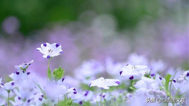 读一段话,宅家读句子,静待春暖花开