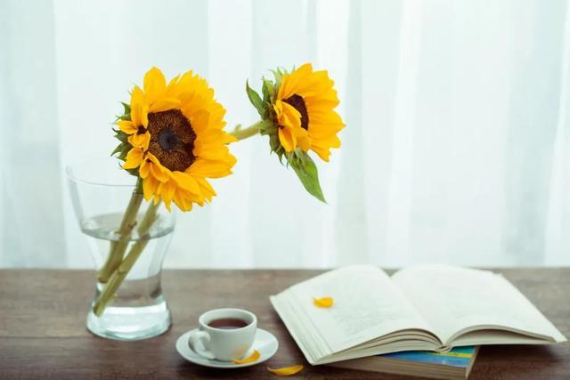 关于读书的句子,《读书的乐趣》作文400字,小学以读书为话题的作文