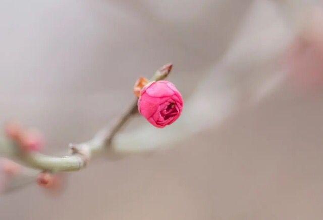 """描写梅花的诗句,陆游这首咏梅词全文无一""""梅""""字,却写出了梅花的魂"""