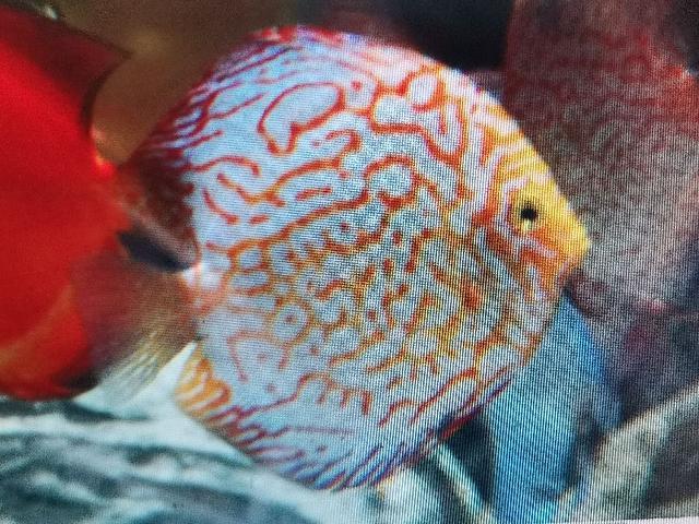 海鱼图片,神奇而美丽的海洋鱼类,形态各异,五彩斑斓,太漂亮了