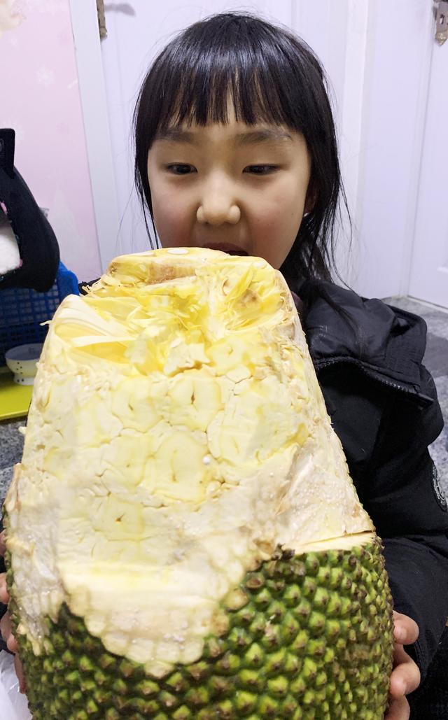 菠萝蜜怎么剥,8岁小朋友轻松剥出整个菠萝蜜