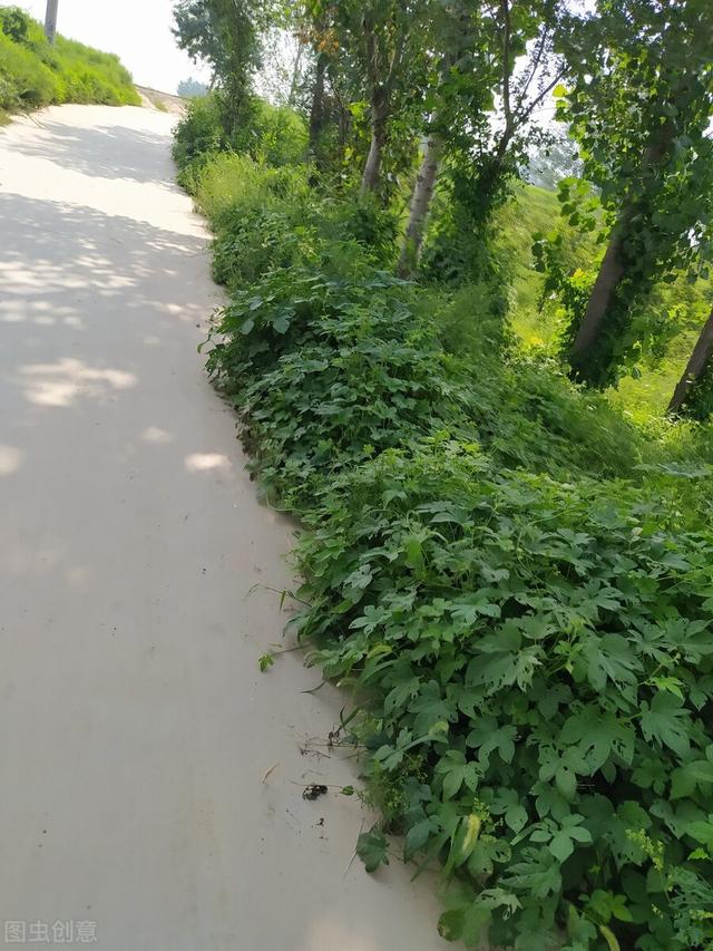 """农村野外这几种植物,是很多人儿时的""""噩梦"""",看到后转身就跑"""