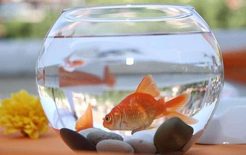 鱼品种,中国常见200种观赏鱼图文介绍,有的漂亮,有的丑陋(上)