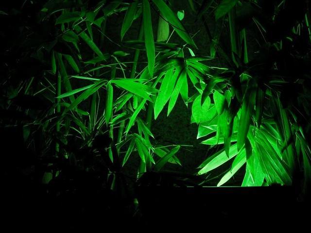"""早上的诗,""""露华生笋径,苔色拂霜根""""——唯美的竹林清晨,在李贺的五律中"""