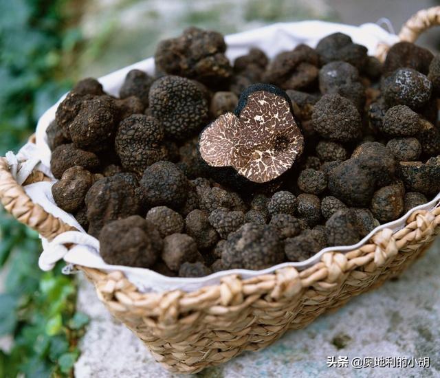 白松露的吃法,这种猪吃的蘑菇为什么能卖到3万一公斤?它到底好吃在哪里?