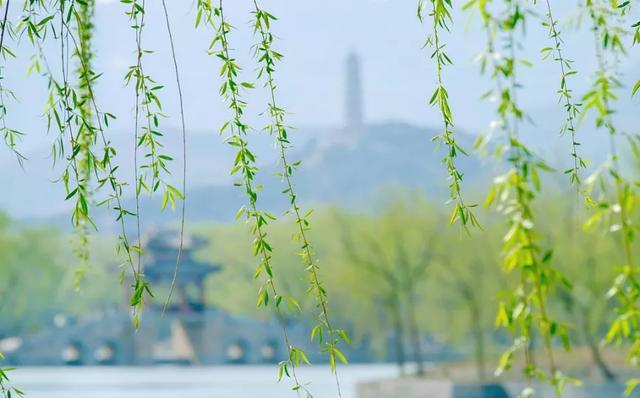 节日,清明时节:节气食俗有什么?(上)