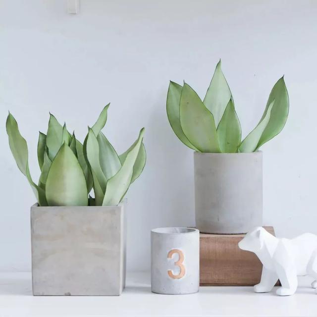 花卉品种,推荐5个新品种花草,时髦又好养,给家带来别样格调