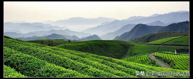 5月节日,5月21日,第一个世界茶日