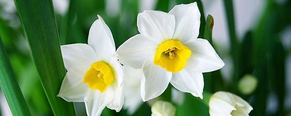 冬天开的花有哪些,冬天有什么花开放,怎么在家养?
