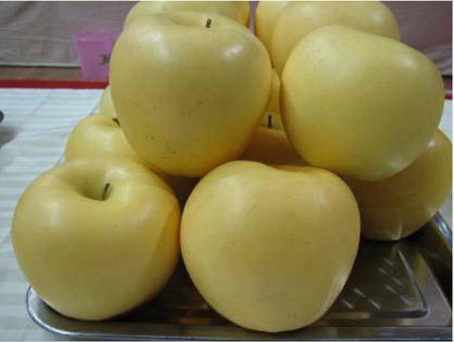 香蕉品种,从黄香蕉苹果说起:金帅、黄香蕉、金冠、黄元帅是同一品种吗?