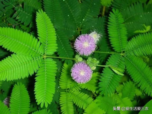 这二十种有趣植物,农村很常见,很多叫不出名字,你认识几种?