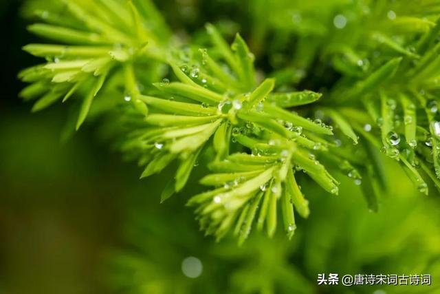 下雨的短句,一春听雨——好雨知时节,当春乃发生