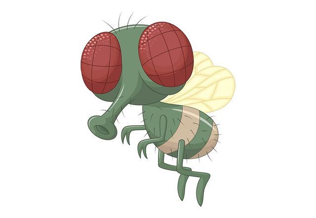 苍蝇图片,为何苍蝇那么难拍?运动感知比人眼快6倍,机动快50倍