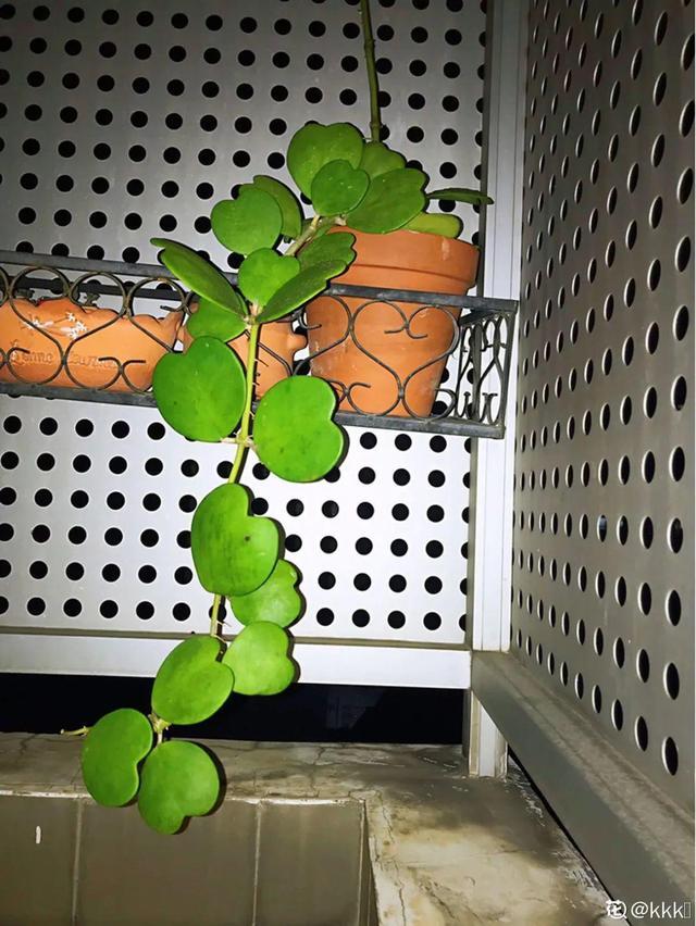 """8种耐阴花,没光也能开爆盆,养在家里超有范儿"""""""