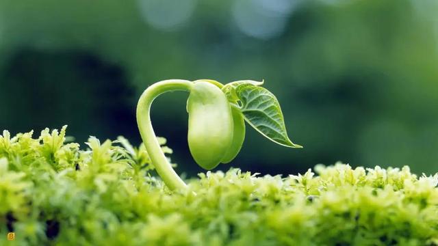 种子的诗,配乐诗朗诵:种子