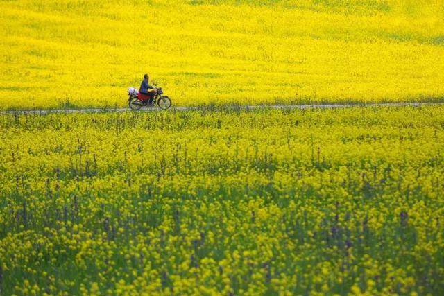 春分的诗,春分诗词10首:溪边风物已春分
