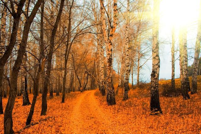 秋天的特征,写秋天的作文600字初中5篇
