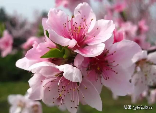 写菊花的句子,诗词曲中描写花的45个好句子