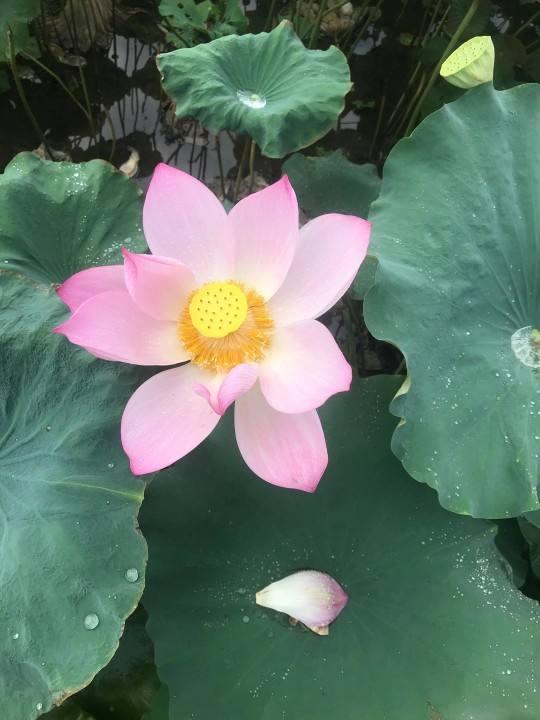 植物知识问答,答对一半,你就是养花大神