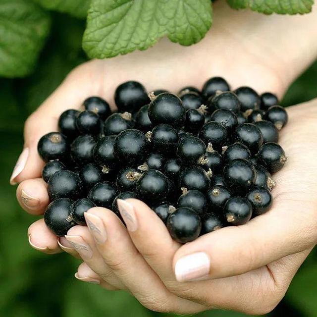 有院子的话,一定要种果树,果子甜、寓意好