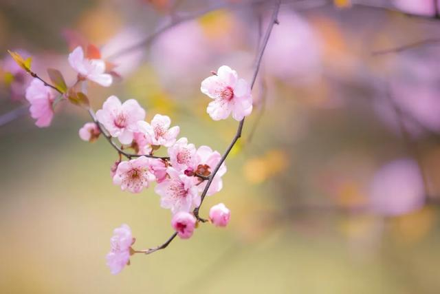 三月三是什么节日,诗词丨又是一年三月三,我在等花也等你