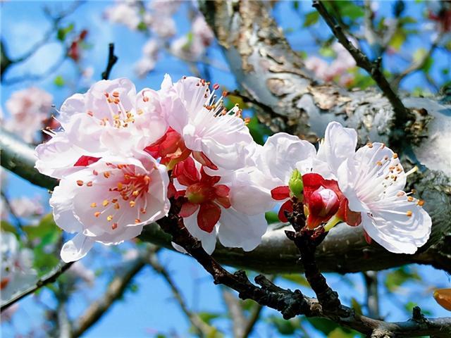 花好词好句,春日赏花,更要知道诗中花事