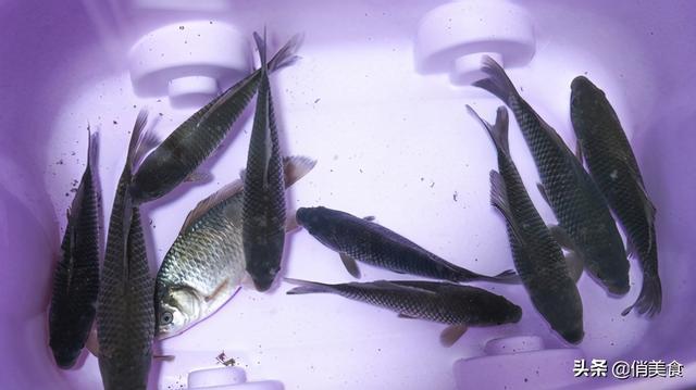 红烧鱼的做法,红烧鱼这样做,不腥不破皮,肉质鲜嫩入味,年夜饭就该这样做