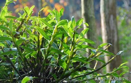 铁皮石斛花的功效与作用吃法,好味道,会偷心:——鲜石斛花饺子