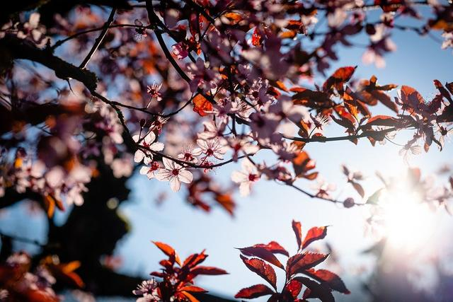 迟日江山丽的全诗,10分钟《古诗课》「29」迟日江山丽,春风花草香