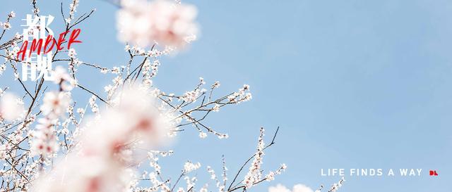 春天的句子,文人的春天是什么样子?关于春天的小句子(绝美文案分享)