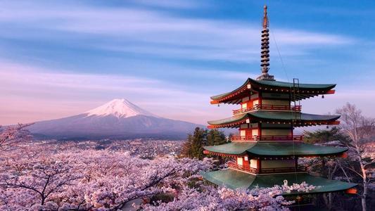 樱花的寓意,花是樱花,人是武士:日本的樱花文化
