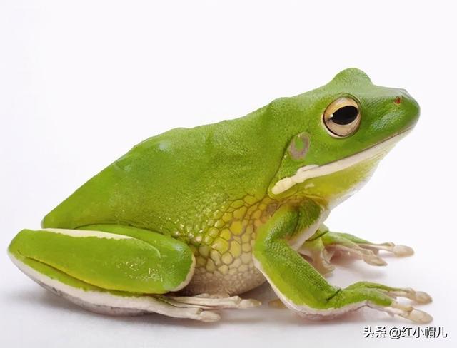 井底之蛙的寓意,少儿美术/ 仰望星空的井底蛙